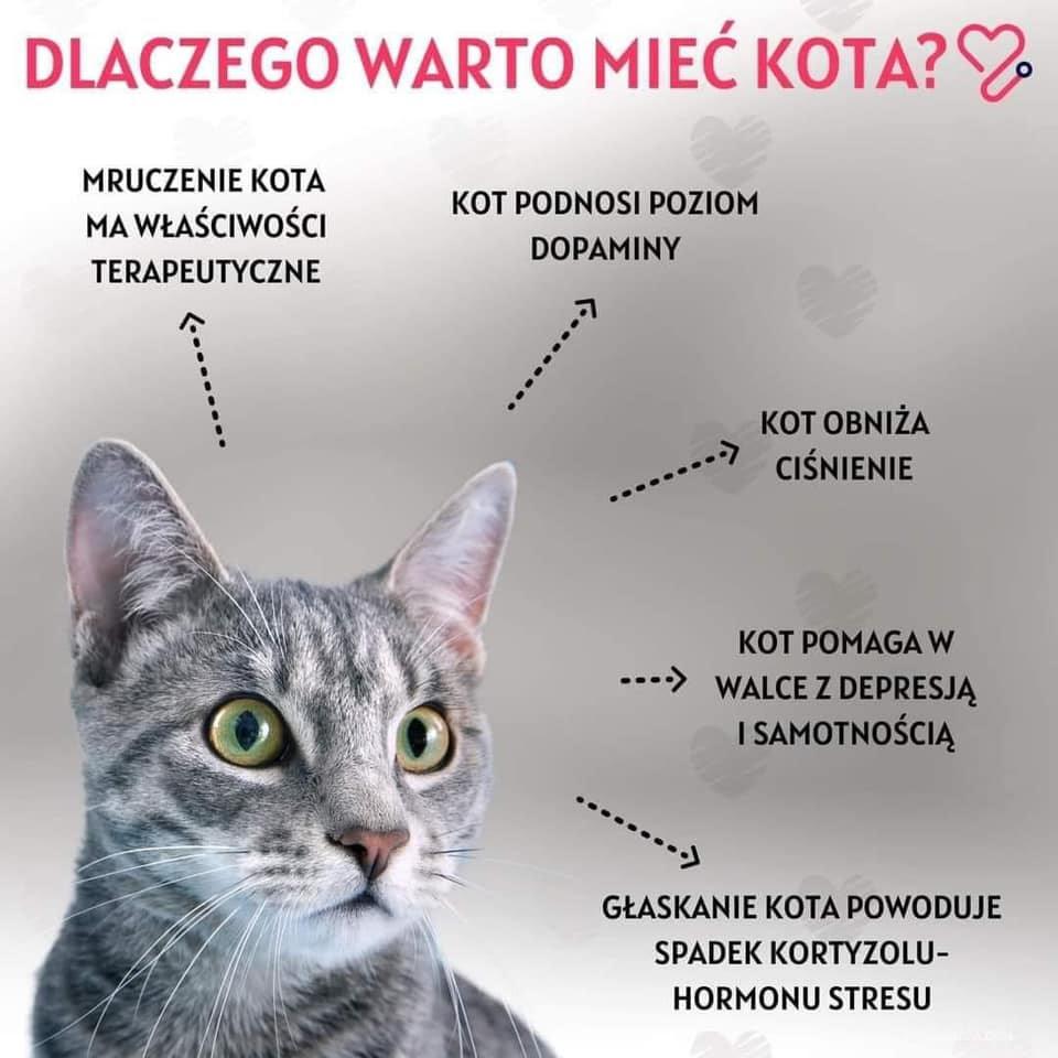 dlaczego warto miec kota
